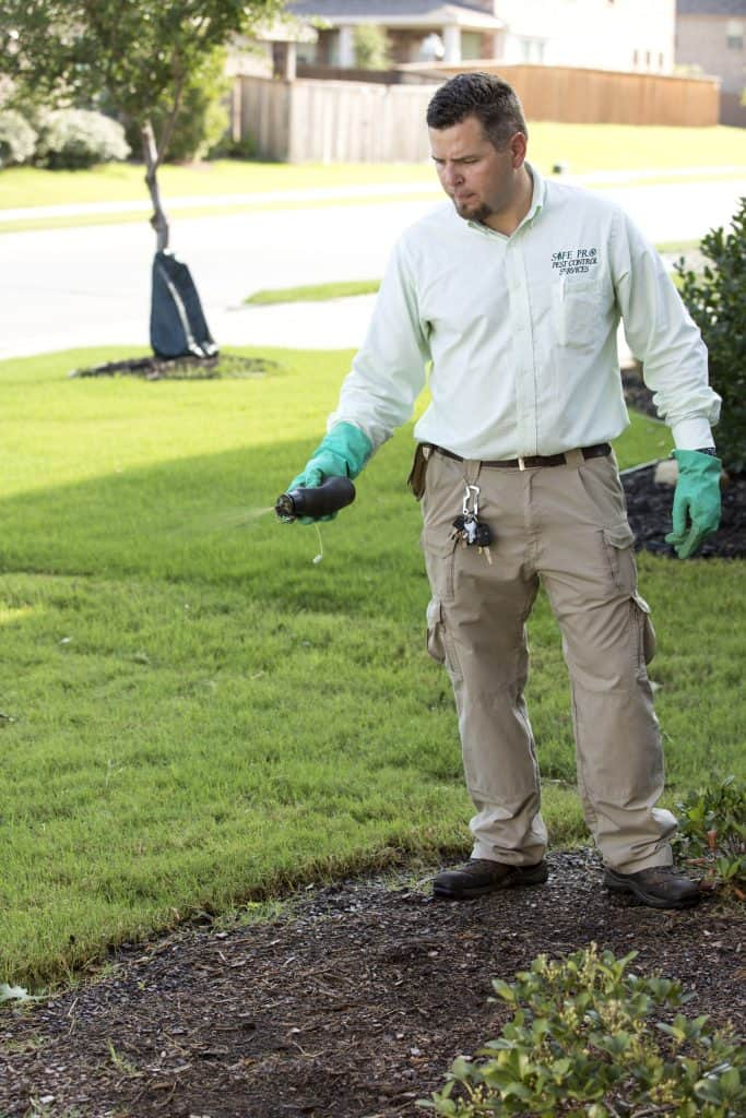 rodent removal mckinney