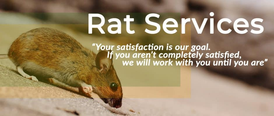 Rodent and Rat Services Banner for Plano
