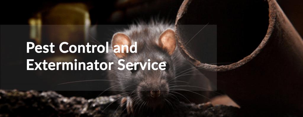Pest control & Exteminator Serves