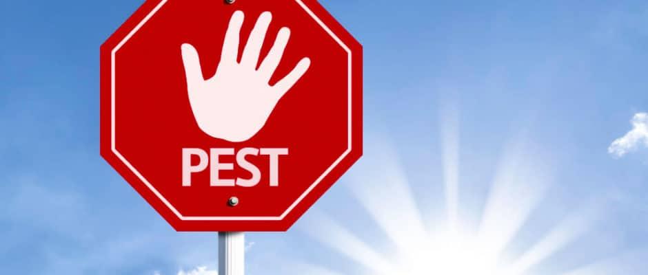Pest Control Service Frisco TX