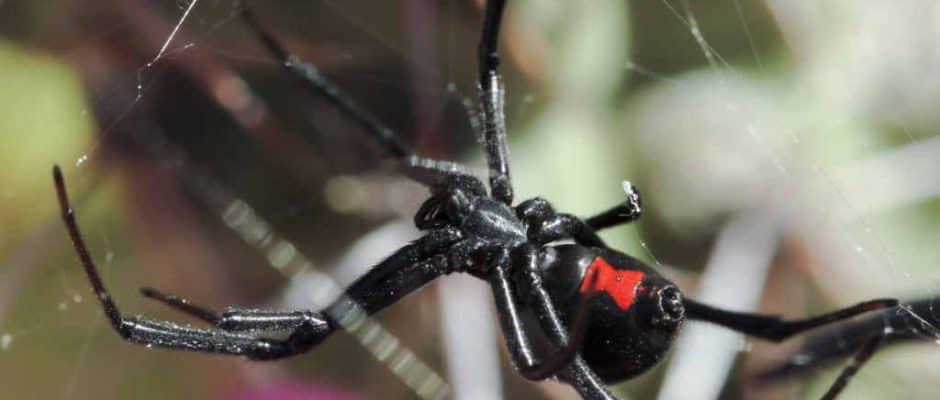 Pest Control Frisco TX
