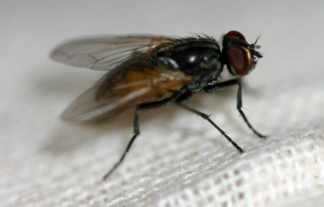 close up photo of a fly in white cloth