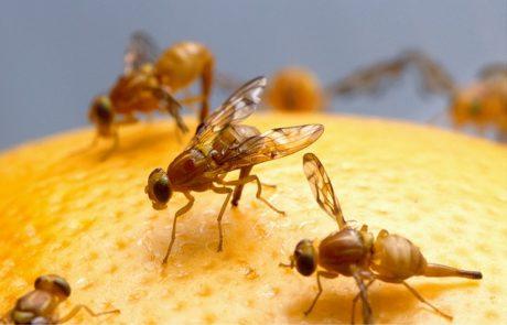 flies on top of an orange fruit